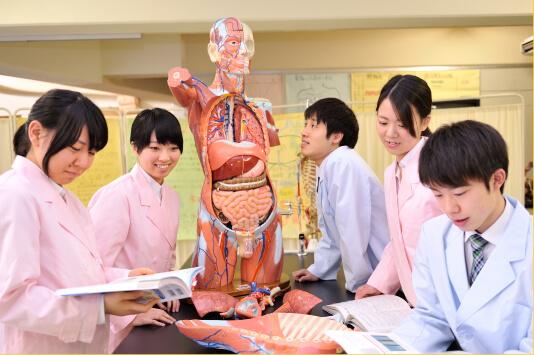 解剖生理学実験